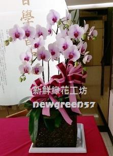 B014蘭花