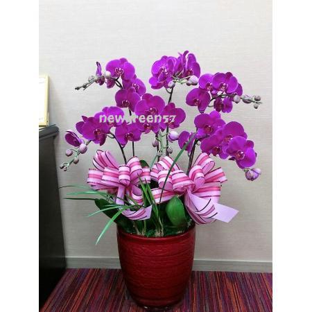 B015蘭花