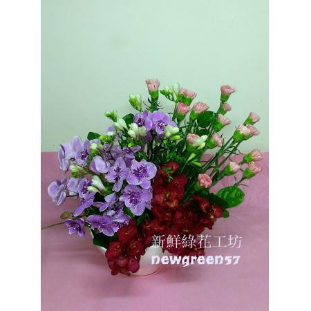 D023康乃馨盆花母親節盆花