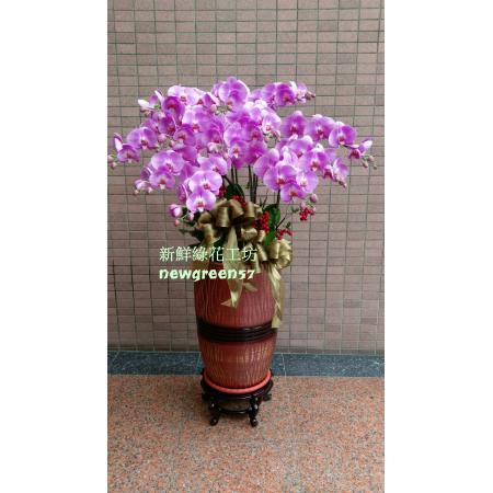 B037高貴蘭花蘭花盆景