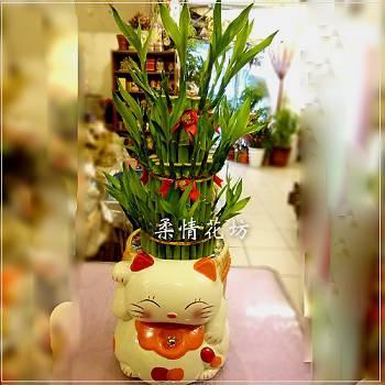 E005招財貓開運竹盆栽節節高昇開幕喬遷賀禮祝賀盆栽