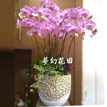 C010蝴蝶蘭組合盆栽慶祝榮陞、開幕喬遷、參展成功、祝賀花禮