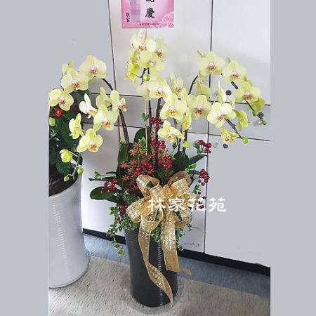 B019蝴蝶蘭組合盆栽開幕落成賀禮、喬遷、祝賀盆栽