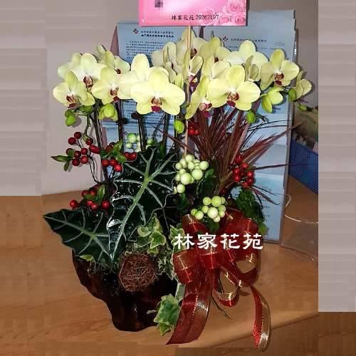 B020蝴蝶蘭組合盆栽開幕落成賀禮、喬遷、祝賀盆栽