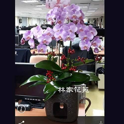 B021蝴蝶蘭組合盆栽開幕落成賀禮、喬遷、祝賀盆栽