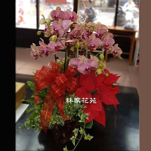 B023蝴蝶蘭組合盆栽開幕落成賀禮、喬遷、祝賀盆栽