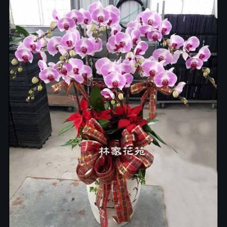 B024蝴蝶蘭組合盆栽開幕落成賀禮、喬遷、祝賀盆栽