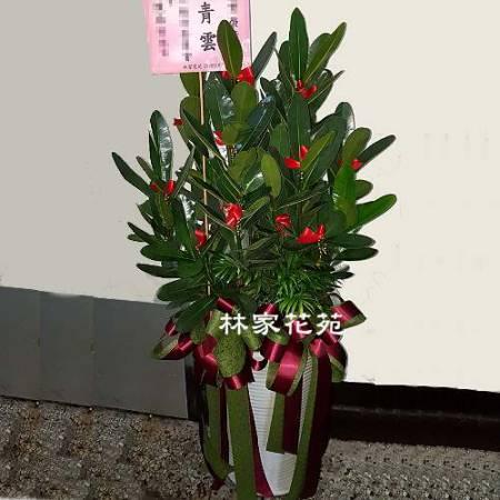 D011觀葉盆栽喬遷之喜榮陞誌喜盆栽開幕賀禮