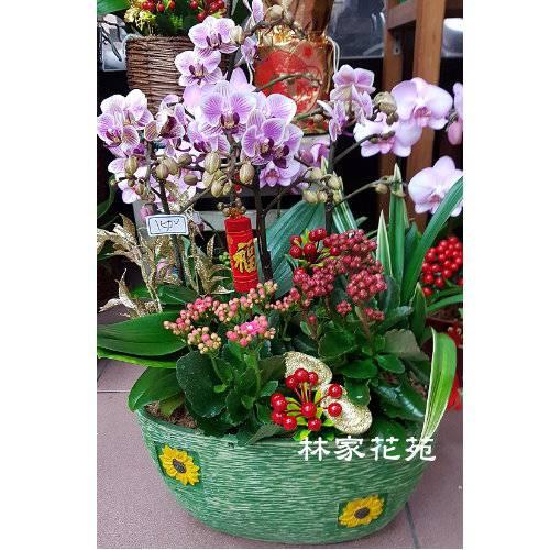 B035蝴蝶蘭組合盆栽開幕落成賀禮、喬遷、祝賀盆栽