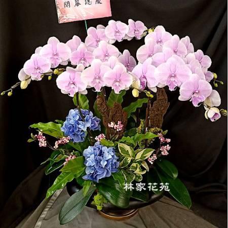 B039蝴蝶蘭組合盆栽開幕落成賀禮、喬遷、祝賀盆栽