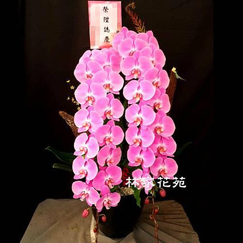 B040蝴蝶蘭組合盆栽開幕落成賀禮、喬遷、祝賀盆栽