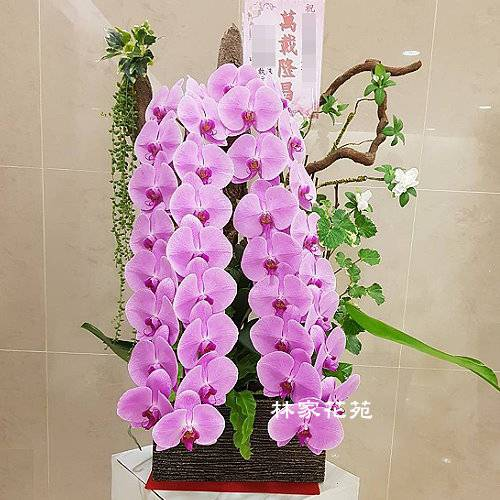 B041蝴蝶蘭組合盆栽開幕落成賀禮、喬遷、祝賀盆栽