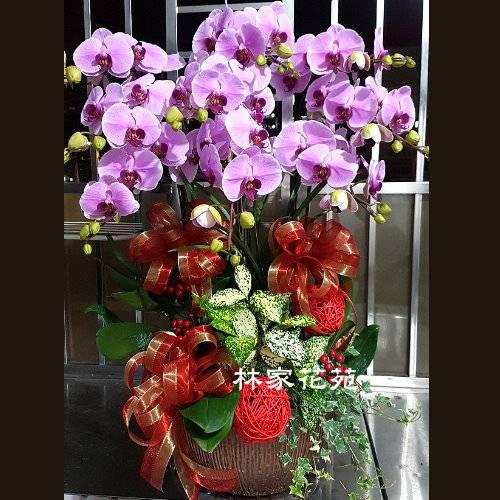 B043蝴蝶蘭組合盆栽開幕落成賀禮、喬遷、祝賀盆栽