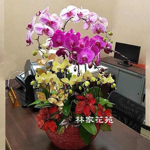 B044蝴蝶蘭組合盆栽開幕落成賀禮、喬遷、祝賀盆栽