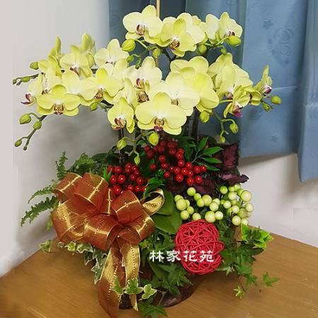 B045蝴蝶蘭組合盆栽開幕落成賀禮、喬遷、祝賀盆栽