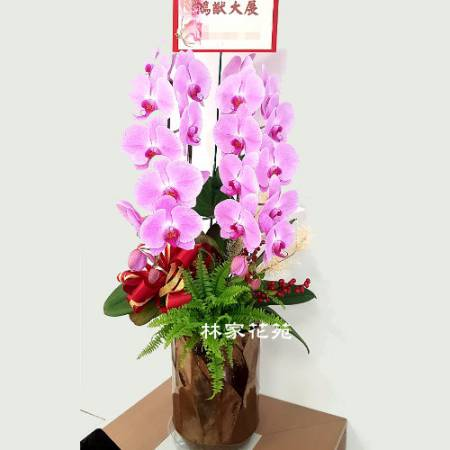 B046蝴蝶蘭組合盆栽開幕落成賀禮、喬遷、祝賀盆栽