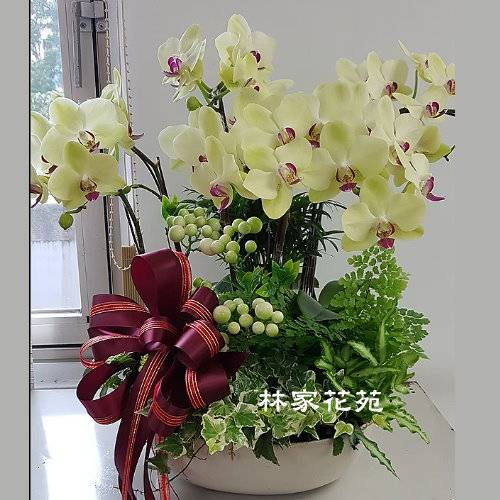 B047蝴蝶蘭組合盆栽開幕落成賀禮、喬遷、祝賀盆栽