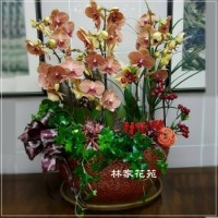 B004蝴蝶蘭組合盆栽開幕落成賀禮、喬遷、祝賀盆栽