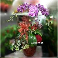 B010蝴蝶蘭組合盆栽開幕落成賀禮、喬遷、祝賀盆栽