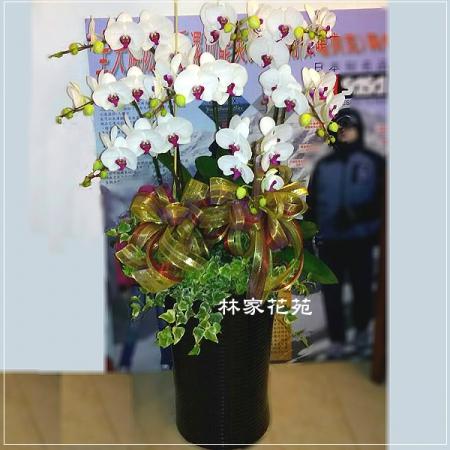 B012蝴蝶蘭組合盆栽開幕落成賀禮、喬遷、祝賀盆栽追思花禮