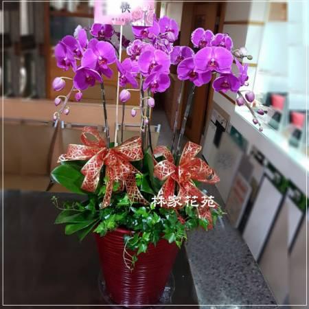 B013蝴蝶蘭組合盆栽開幕落成賀禮、喬遷、祝賀盆栽