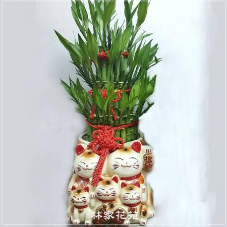 F004招財貓開運竹節節高升好運連連開幕賀禮
