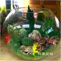 E014玻璃球~開運綠色組合造型盆栽