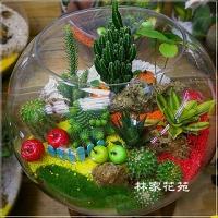 E015玻璃球~開運綠色組合造型盆栽