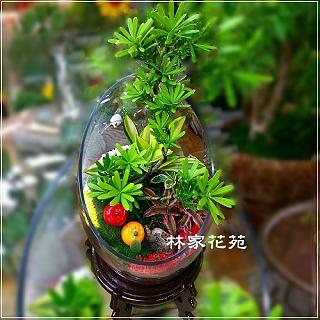 E016玻璃球~開運綠色組合造型盆栽