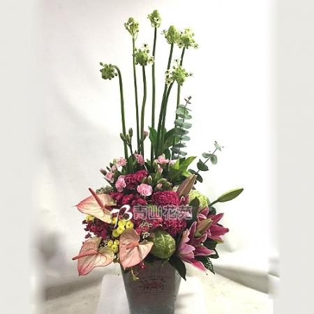 C021精緻盆花會場佈置盆花店面擺設