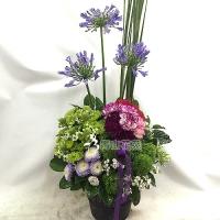 C022精緻盆花會場佈置盆花店面擺設