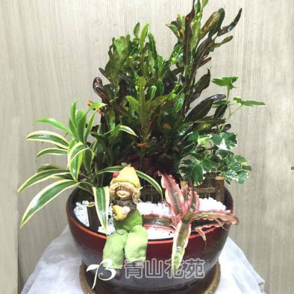 F030觀葉植物組合盆栽喬遷之喜榮陞誌喜盆栽喜慶盆栽