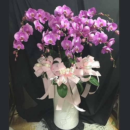 E026蘭花組合盆栽(可依場合不同調整緞帶顏色)請來電洽詢