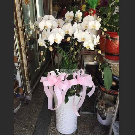 E027蘭花組合盆栽(可依場合不同調整緞帶顏色)請來電洽詢