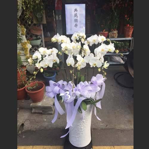 E028蘭花組合盆栽(可依場合不同調整緞帶顏色)請來電洽詢