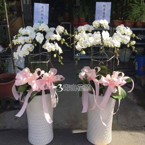 E029蘭花組合盆栽(可依場合不同調整緞帶顏色)請來電洽詢