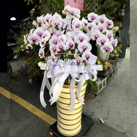 E032蘭花組合盆栽(可依場合不同調整緞帶顏色)請來電洽詢