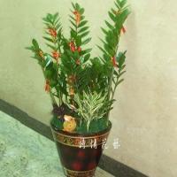 T010金錢樹組合盆栽喬遷之喜榮陞誌喜盆栽