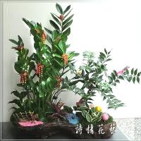 T012金錢樹組合盆栽喬遷之喜榮陞誌喜盆栽