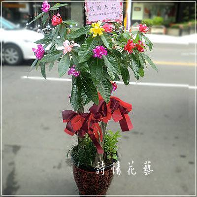 T020馬拉巴栗(發財樹)綠色盆栽祝賀盆栽喜慶送禮盆栽