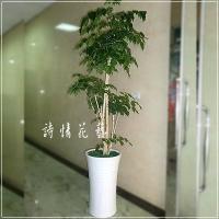 T021綠寶樹綠色盆栽祝賀盆栽喜慶送禮盆栽