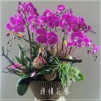 E031高雅蘭花祝賀蘭花喜慶蘭花開幕喬遷盆栽
