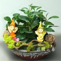 T024圓葉椒草組合盆栽喬遷之喜榮陞誌喜盆栽