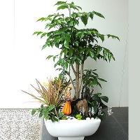T025綠寶樹組合盆栽喬遷之喜榮陞誌喜盆栽