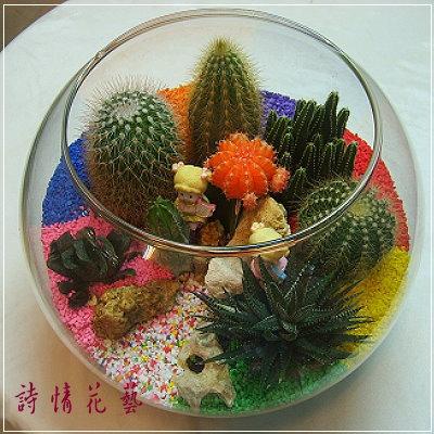 T027多肉植物仙人掌玻璃球組合盆栽