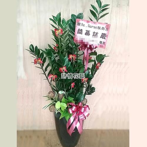 T037金錢樹組合盆栽喬遷之喜榮陞誌喜盆栽參展成功