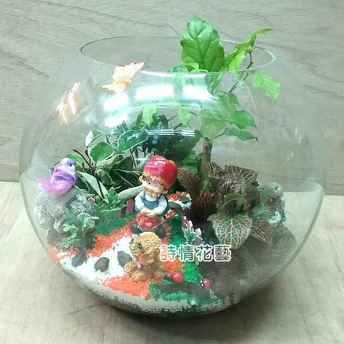 T046觀葉玻璃球組合盆栽喬遷之喜榮陞誌喜盆栽