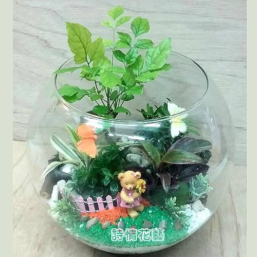T048觀葉玻璃球組合盆栽喬遷之喜榮陞誌喜盆栽