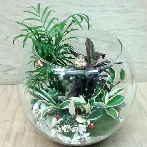 T049觀葉玻璃球組合盆栽喬遷之喜榮陞誌喜盆栽