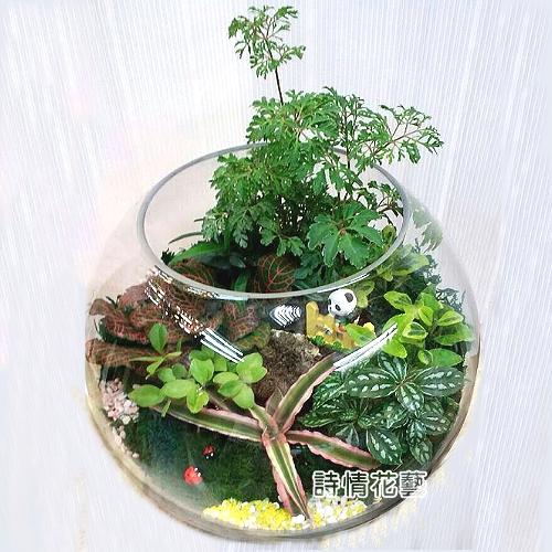 T054觀葉玻璃球組合盆栽開幕喬遷之喜榮陞誌喜盆栽